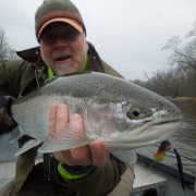 Manistee River Below Tippy Dam Report, Manistee River Winter Steelhead, Manistee River Spey Fishing, Manistee River Swung Fly, Chrome Steelhead, Streamer Fishing for Steelhead