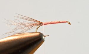Hendrickson mayfly