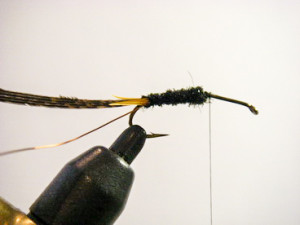 black stonefly nymph