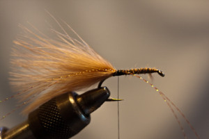 carp crayfish fly