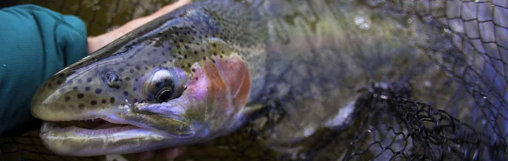 Michigan Fishing Reports | Manistee River, | Pere Marquette