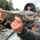 Atlantic Salmon AuSable River