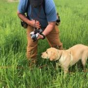 Spring Training Gundog - Bird Introduction