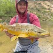 Pine River Brown Trout